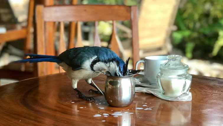 bird beside container on the table