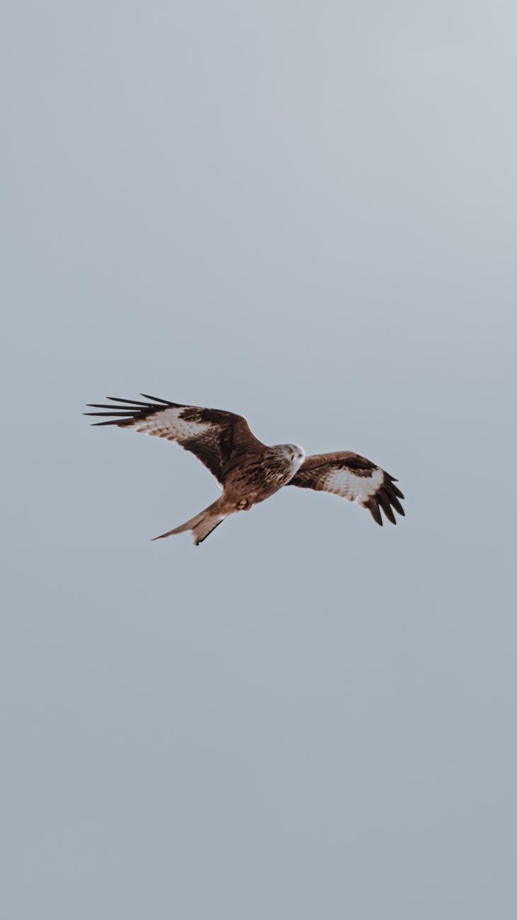photo of flying bird