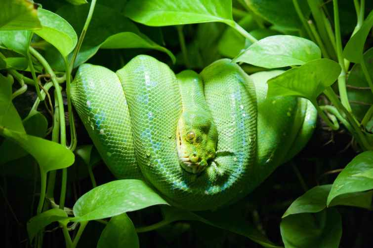 close up photo of green snake on leaves